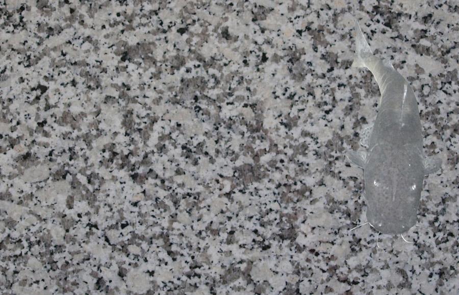 bianco sardo aus dem granit sortiment von wieland naturstein. Black Bedroom Furniture Sets. Home Design Ideas