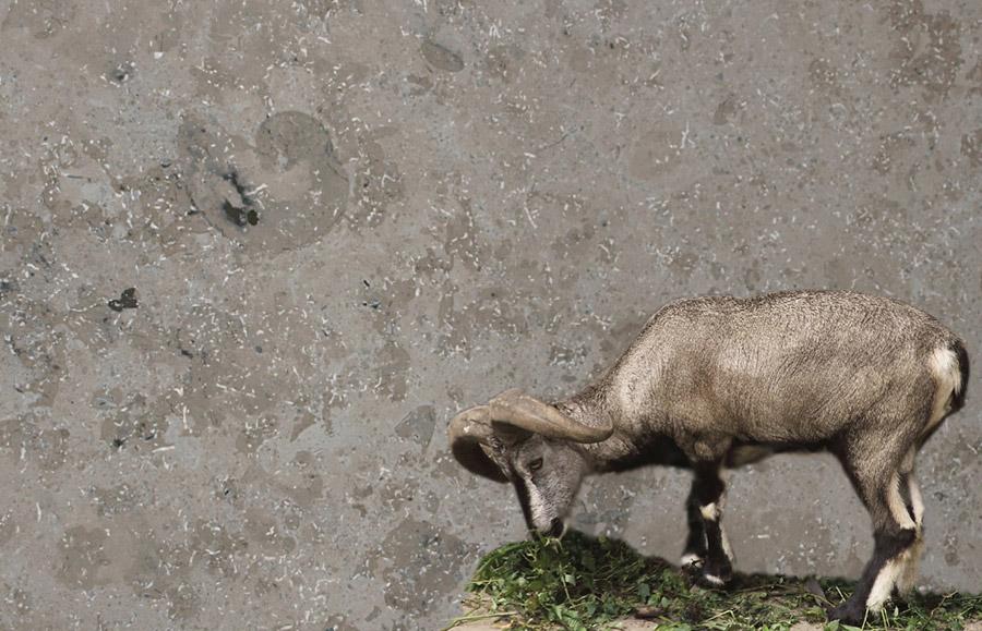 Jura Grau aus dem Marmor - Sortiment von Wieland Naturstein